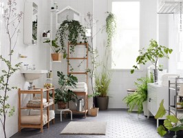 The best place to put a plant in the house